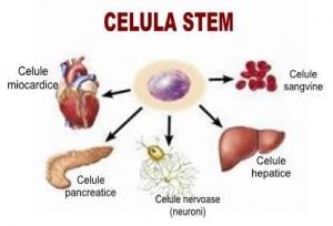Stemulin - celule stem